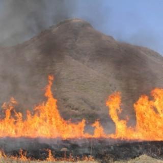 坊ガツル湿原の野焼き